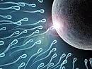 """Allarme pesticidi in frutta e verdura """"Ecco come riducono la fertilità maschile"""""""