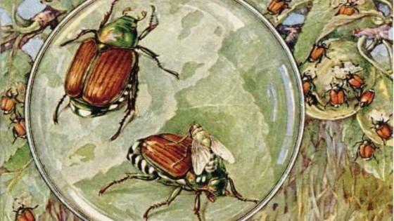 L'ultimo insetto killer arriva dal Giappone. Sotto attacco i nostri pomodori