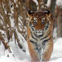 Le specie a rischio estinzione nel 2015