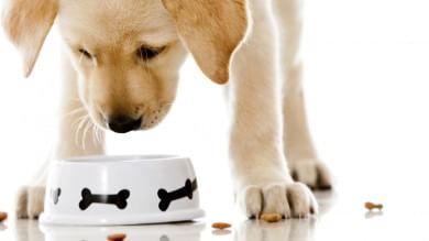 Resti di animali non dichiarati  nei cibi pronti per cani e gatti