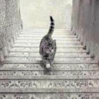 Il gatto sale o scende le scale? Il nuovo caso che divide il web