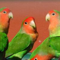 Liti condominiali, protagonisti cani, gatti e pappagalli