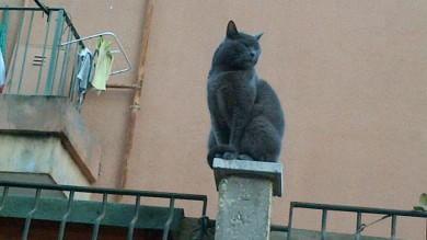 """Gli animali che abitano in città  Terni e Prato quelle più """"pet friendly"""""""