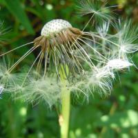 Vittime delle allergie? È colpa (anche) del cambiamento climatico