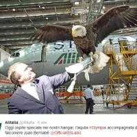 L'aquila Olympia vola a Fiumicino: in missione contro i piccioni