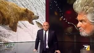 Beppe Grillo, grizzly della politica