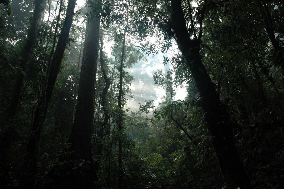 Earth day, l'appello del WWF: salviamo le foreste
