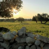 """Earth Day, Coldiretti: """"Cementificazione si è presa il 28% delle nostre campagne"""""""