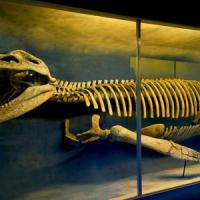 Trovato fossile di cronosauro, un lucertolone lungo 13 metri vissuto 110 milioni di anni fa
