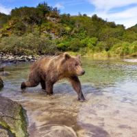 Un giorno con un grizzly, la tenerezza  di un predatore