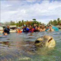 Filippine, 'Scusate ci sono anche io': il photobomb della tartaruga