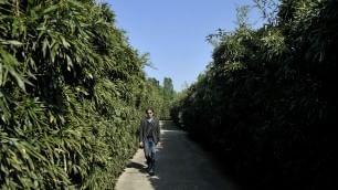 Apre il labirinto da record: 7 ettari A spasso tra arte e 'muri' di bambù