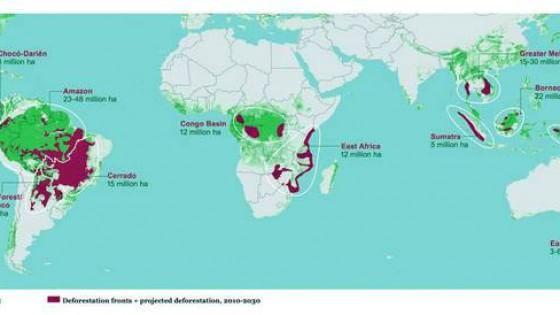 """Wwf: """"170 milioni di ettari di foreste a rischio entro il 2030"""""""