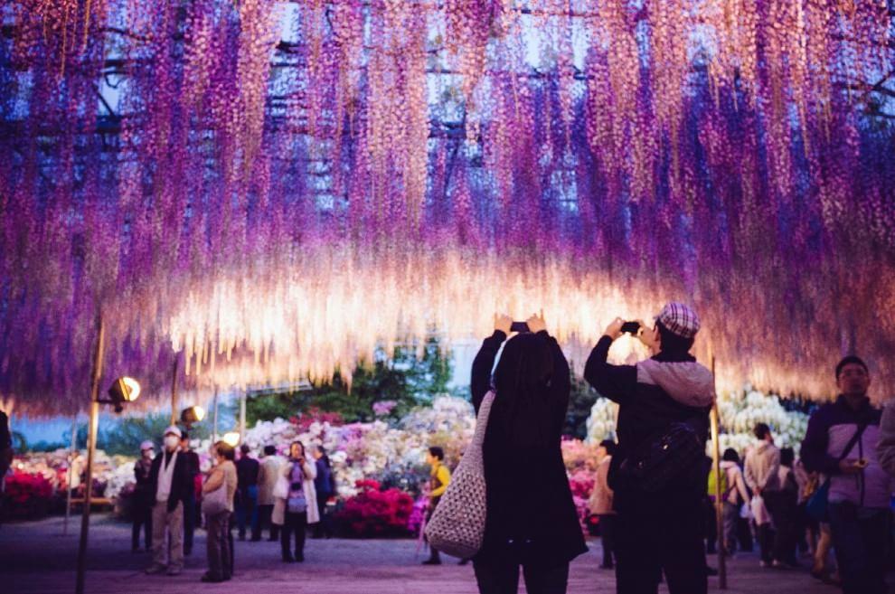 Giappone l 39 albero della vita che ha ispirato avatar in for Glicine disegno