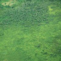 """Foreste, persi tredici milioni di ettari ogni anno. Il WWF: """"Difendiamo il nostro cuore..."""