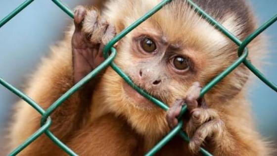 Risultati immagini per vivisezione immagini
