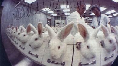 Ue, parla la scienza contro la vivisezione