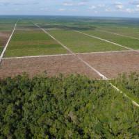La deforestazione amplifica le catastrofi, l'Asia più flagellata