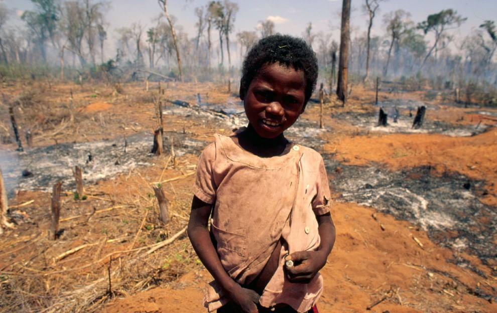 Foreste, la cintura di sicurezza verde contro i disastri naturali