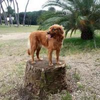 Cani e gatti avvelenati a Roma, ispezione a sorpresa della Forestale