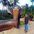Selfie a portata di proboscide   il fotografo è un elefante    Foto  - Animali, scatti ravvicinati