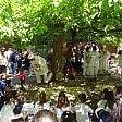 Wwf, la festa delle Oasi  Musica e cibo  per salvare le foreste
