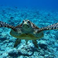 """Le tartarughe marine rischiano di scomparire: in Kenya un """"ospedale"""" per salvarle"""