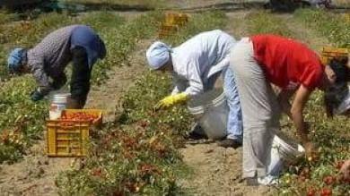 Il Medioevo torna nei campi sono 60mila le italiane in schiavitù