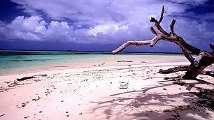 Mi stendo dove la sabbia è rosa le pink beach più belle del mondo