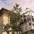 Como, centro città invaso  da uno sciame di 10mila api