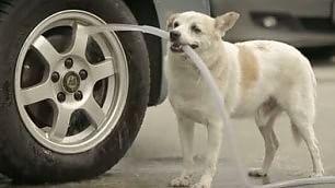 Un cane sa cosa vuol dire amare Lo spot è un corto sull'amicizia