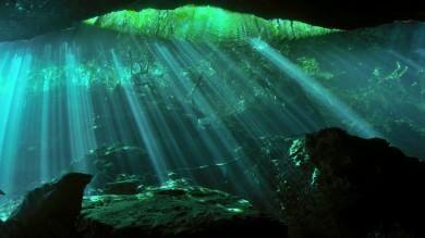 La metà dell'ossigeno arriva dal plancton