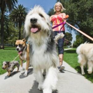 """Cercasi """"Dog walker"""", un lavoro da 26.500 sterline l'anno"""