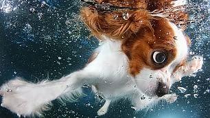 Occhi spalancati e boccacce  cuccioli giocano sott'acqua