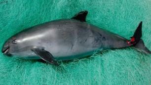 Quasi scomparsi: animali  a rischio d'estinzione