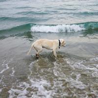 Usa, l'ultimo viaggio con il cane malato: un'avventura commovente