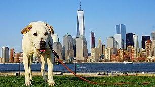 In viaggio col cane malato Un'avventura per dirsi addio