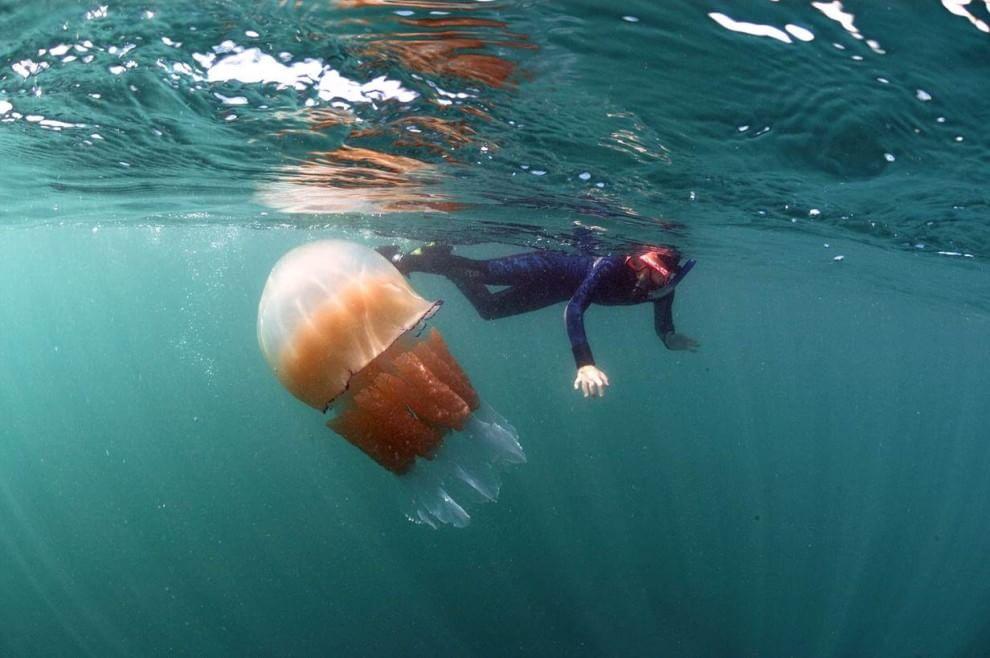 Gb, l'invasione delle meduse giganti