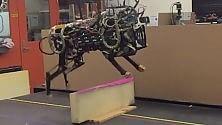 Mit, il ghepardo robot ha imparato a saltare