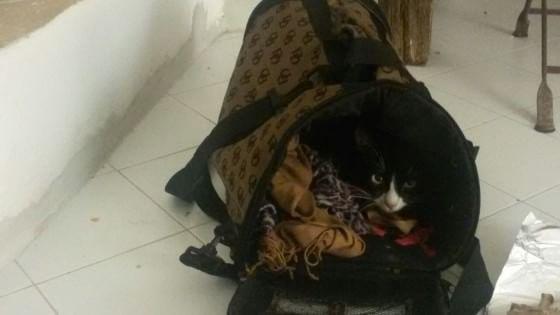 L'incredibile storia della gattina sbarcata a Lampedusa