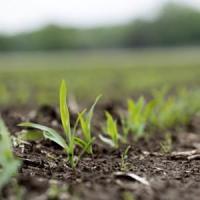 Monsanto punta a Syngenta: un'altra big vuole scappare dal Fisco Usa