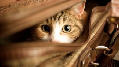 Cani e gatti in vacanza con noi, ecco cosa fare  di PIERA MATTEUCCI