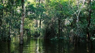 Amazzonia, la ferrovia che attraversa la grande foresta e minaccia le tribù