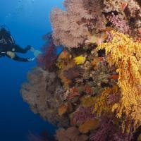 Colori, l'ultima Barriera: i coralli più belli del mondo