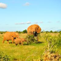 Gli elefanti rossi del Kenya sono salvi. È anche merito di Hollywood