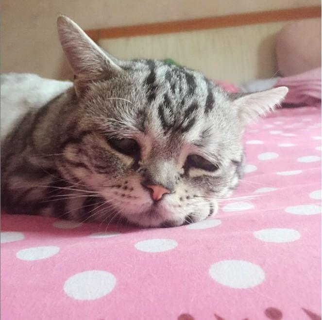 Luhu, il gatto più triste del mondo: boom di follower su Instagram