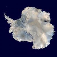 In Antartide c'è una biodiversità inaspettata, oltre 8000 specie