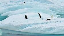 Antartide, scoperta una biodiversità inaspettata: oltre 8000 specie