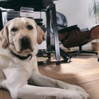 Una giornata da cani in ufficio