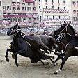 Palio di Siena, abbattuto  cavallo di sette anni
